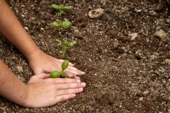 A young child plants a seedling in the dirt. (Image used under license from Shutterstock.com) | Source: UN