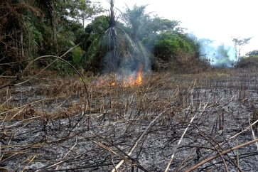 Low yields from slash-and-burn agriculture cannot ensure food security for the Democratic Republic of the Congo's (DRC) rapidly growing population. Photo: UNEP