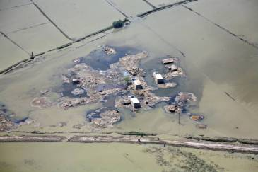 Flooding in Sindh Province Pakistan in 2010 destroyed 2 million acres of standing crops. | Photo: FAO
