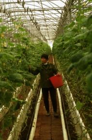 small_FAO_Antonello Proto_China