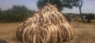 Kenya celebrated the 2015 World Wildlife Day by burning 15 tones of illicit ivory.  | Source: UNEP