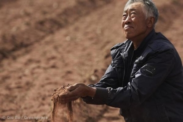 Farmer Zhang Dadi in his dry corn field in Mongolia. Global warming has stricken farmers around the world. © Qiu Bo / Greenpeace.