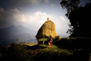 A Nepali woman returns from her fields. The straw will be used to make rugs and feed livestock. | FAO