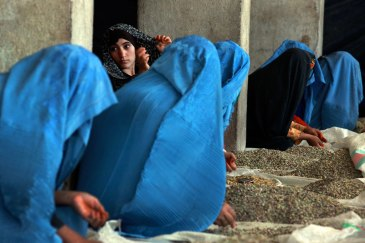 Thirty years of strife have taken a heavy toll on Afghan institutions and on the economy. Seen here are women sorting pistachios by hand at a privately-owned factory in Herat in June 2012. UN Photo/Eric Kanalstein