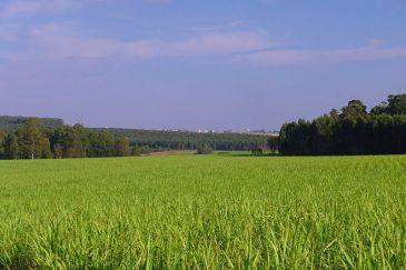 ***Sugarcane plantation in Brazil. Sugarcane bagasse is a type of biomass.   Author: José Reynaldo da Fonseca   Wikimedia Commons