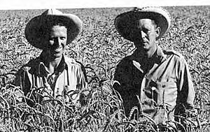 Norman Borlaug and agronomist George Harrer in 1943.