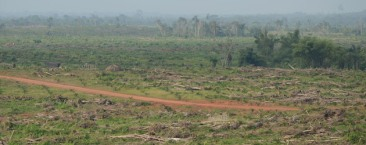 "'We want our land back': Liberian communities speak out about big palm oil ""We want our land back,"" said Bindu Kannea, a mother and a farmer who lives in Grand Cape Mount County. In Liberia community resistance to palm oil expansion is about protecting their last remaining pieces of land. 