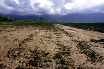 Climate change has serious implications for agriculture and food security. Photo: FAO/L. Dematteis