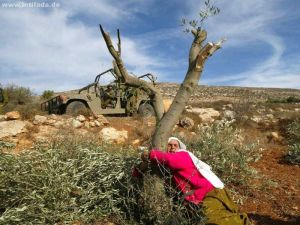 A Palestinan woman protecting an olive tree from destruction. Photo: intifada.de via Frank M. Rafik on Flickr (CC BY-NC-SA). | Source: The Ecologist