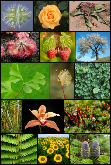 403px-Diversity_of_plants_image_version_5