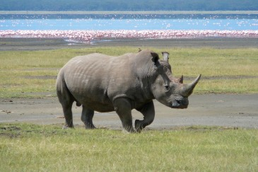 03-03-2015Rhino_Wildlife