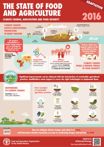 fao-infographic-sofa2016-adaptation-en
