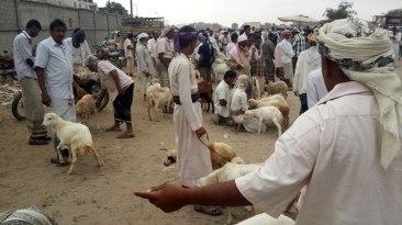 Yemen-FAO_3_