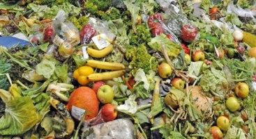 _food-waste_06