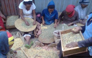 ethiopia_coffee3a