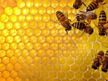 Bees-are-natures-most-economical-builders