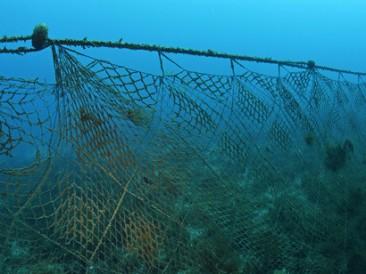 Illegal-fishing