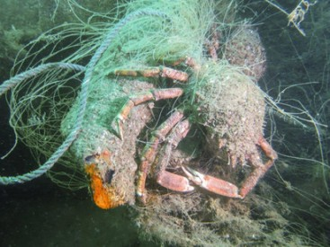 The-amount-of-fishing-gear-remaining-in-the-marine-environment-will-continue-to-accumulate-and