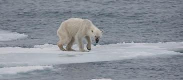 Wildlife warming