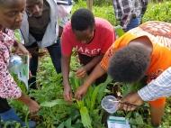 small_FAW scouting Kenya_1