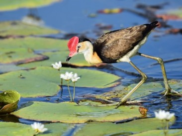 Wetlands-are-seats-of-biological-diversity
