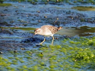 Wetlands-are-sources-of-food-for-humans-animals-and-insects