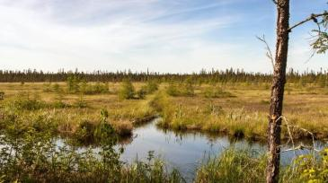 Peat wet 1 by CIFOR Kevin Hiraoka.jpg resized