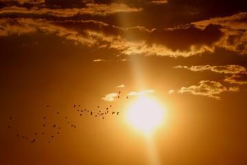 sunset-1625073_640_0