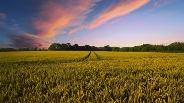 countryside-2326787_1920.jpg