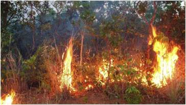 fire-in-the-Amazon_