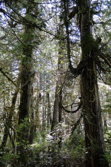 Rain_Forest_Walk_-_Pacific_Rim_National_Park_-_Vancouver_Island_BC_-_Canada_-_01.jpg