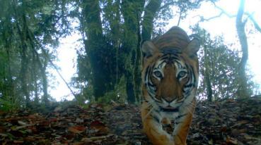 TigerDay2019-IMG_0032