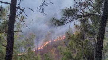 Wildfires 4 Wikimedia Forest_fire_in_Almora_District_2016