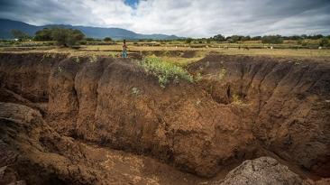 Soil-story.jpg