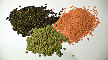 Pulses_1280px-3_types_of_lentil.jpg_Photo_by_Wikimedia_Commons
