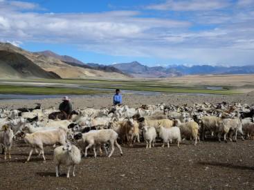 Changthang-pastoralists-goat-camp-Hanle-Ladakh-c-Ashish-Kothari