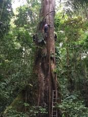bosques_tropicales3