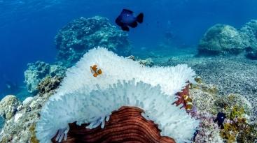 IYORBank_CoralBleaching_TheOceanAgency