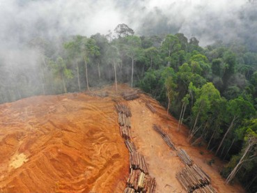 Deforestation-accounts-for-about-17-to-25-percent-of-the-worlds-emissions-of-carbon-dioxide