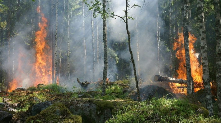 forest-fire-432870_1920.Ylvers-Pixabay