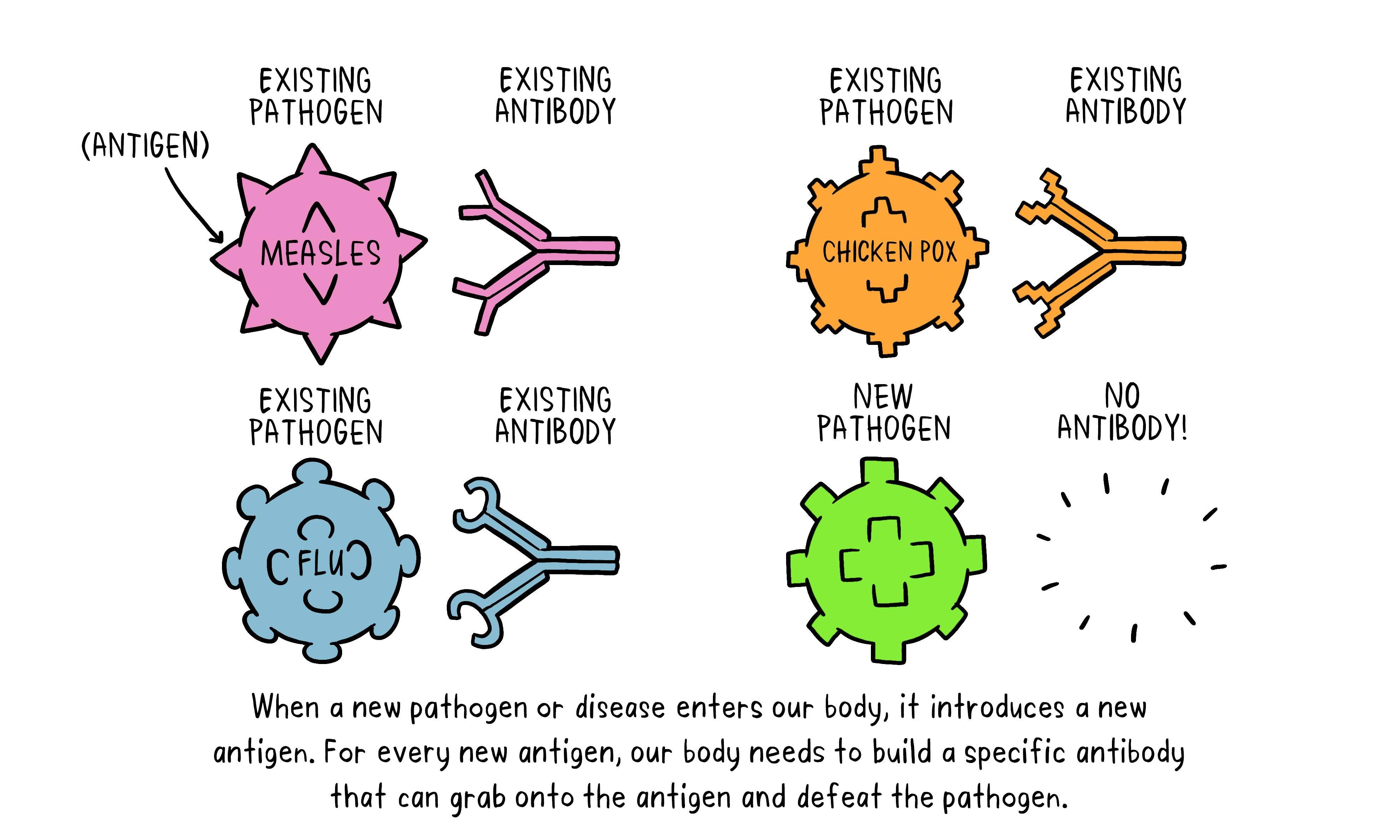 vaccines-antibody-illustration-01-29-oct7f4a97bd839b4b6996c82c1832a52682