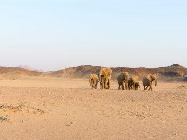 Namibian_Desert_Elephants-Stephan_Scholvin-1024x768