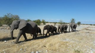 Namibian_Elephants_in_Etosha-Stephan_Scholvin-1024x576