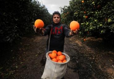 Oranges_0