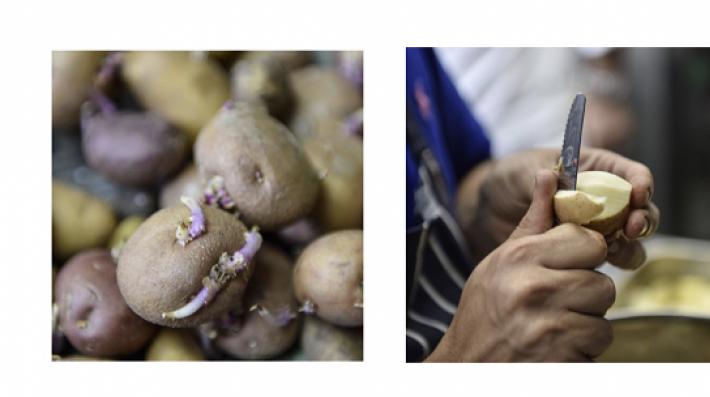 Potato Transformation