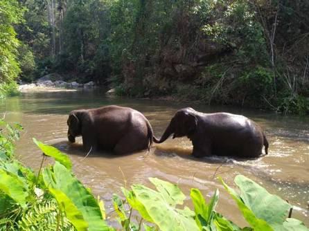 two-elephants_