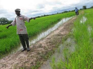 ricefieldsghana
